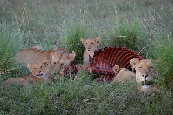 Travel-Tribe-Africa-Mara-PD-066