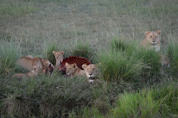 Travel-Tribe-Africa-Mara-PD-067