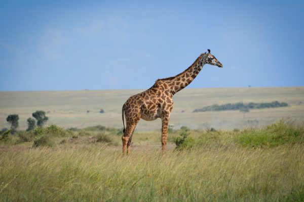 Travel-Tribe-Africa-Mara-PD-083