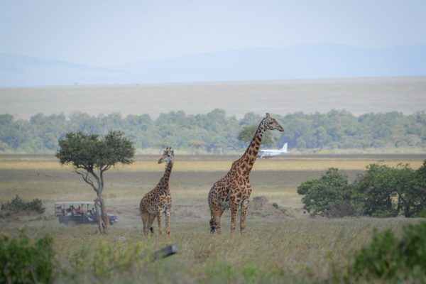 Travel-Tribe-Africa-Mara-PD-148
